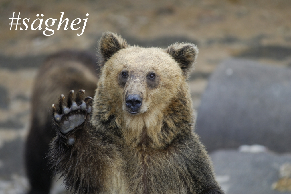 #säghej - det är allt annat än en björntjänst