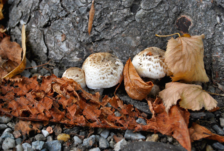 Fredagsinspiration: Så nyttig är svampen vi äter & veckans