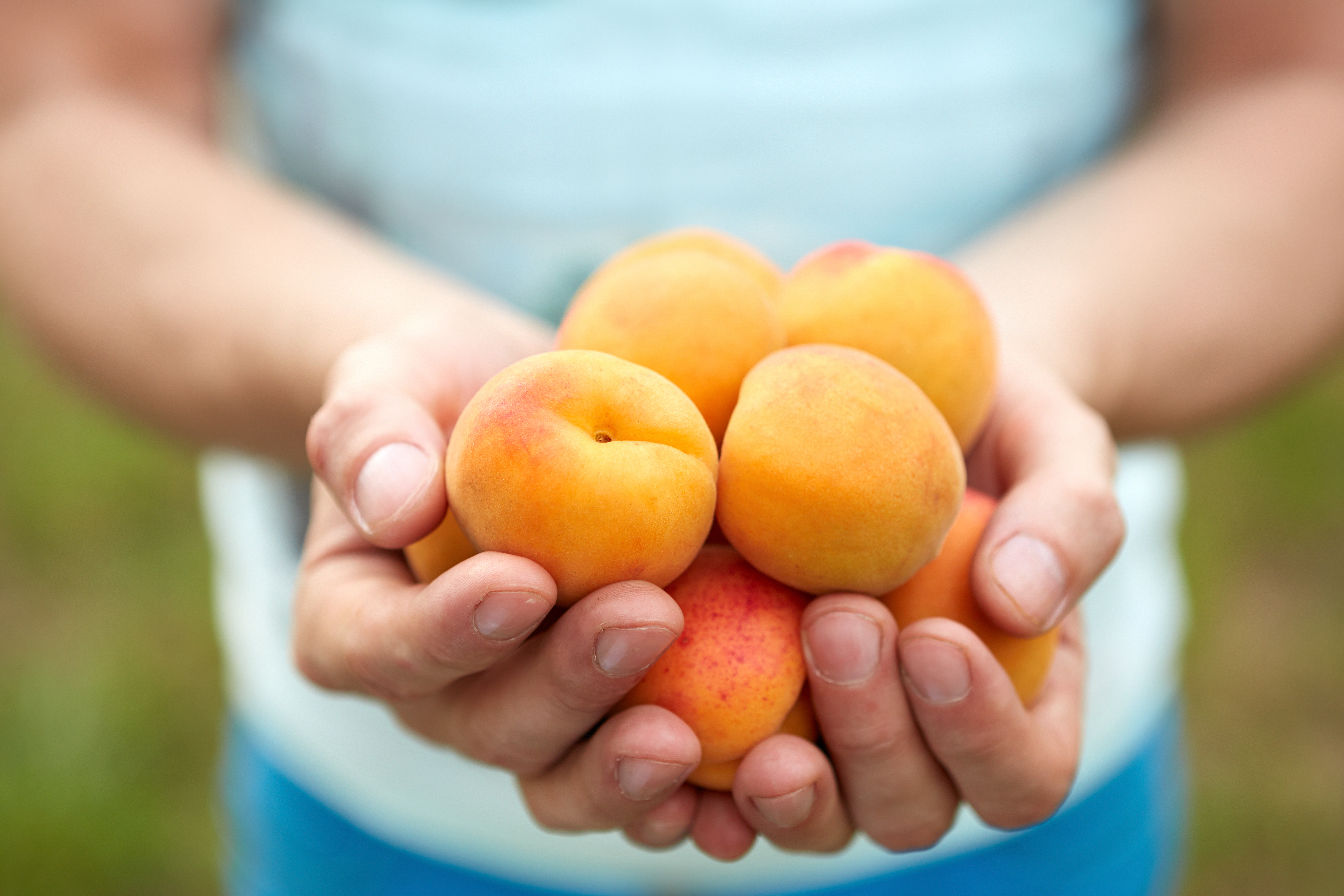 torkade aprikoser gravid