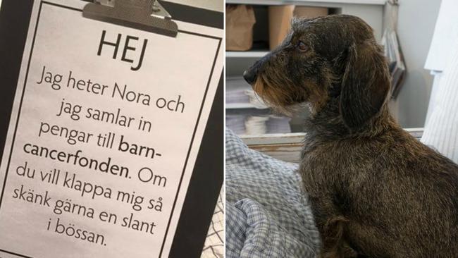 hunden-nora-samlar-in-pengar-till-barncancerfonden-matte-erika-nyholm-bildkalla_svt-nyheter